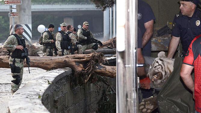 Tragedia w Tbilisi: tygrys zagryzł mężczyznę