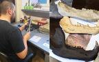 Szczątki prehistorycznego niedźwiedzia znaleziono w Nadleśnictwie Waliły