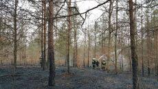 Pożar w Nadleśnictwie Trzcianka (Marta Drzewiecka/Lasy Państwowe)